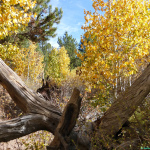 Sagehen Creek – Protect Quiet Trails