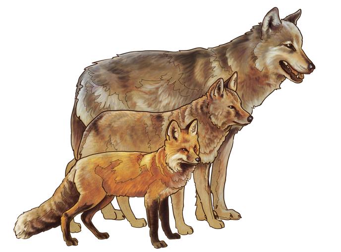 688_Canid_comparison