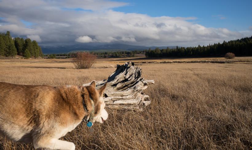 Truckee Airport Noisy Private Jets Disturb Tahoe Wildlife